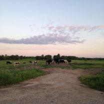 addison-county-scene-1